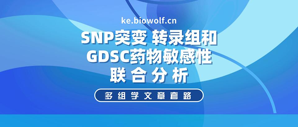 多组学文章套路之SNP突变联合转录组和GDSC药物敏感性分析视频